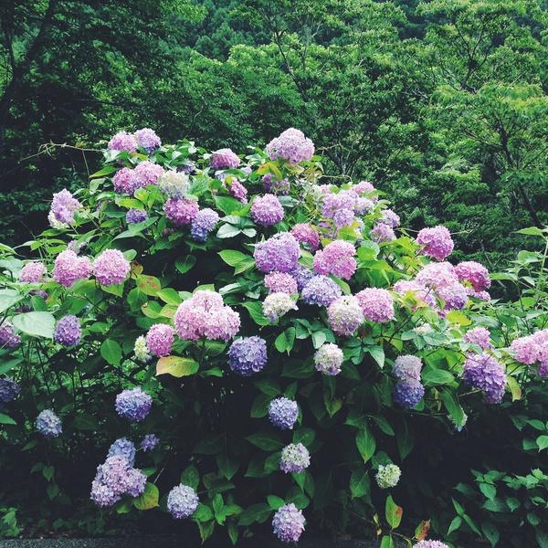 【 美味しかったものログ Vol.6】素敵なカフェまで、山を越えて。
