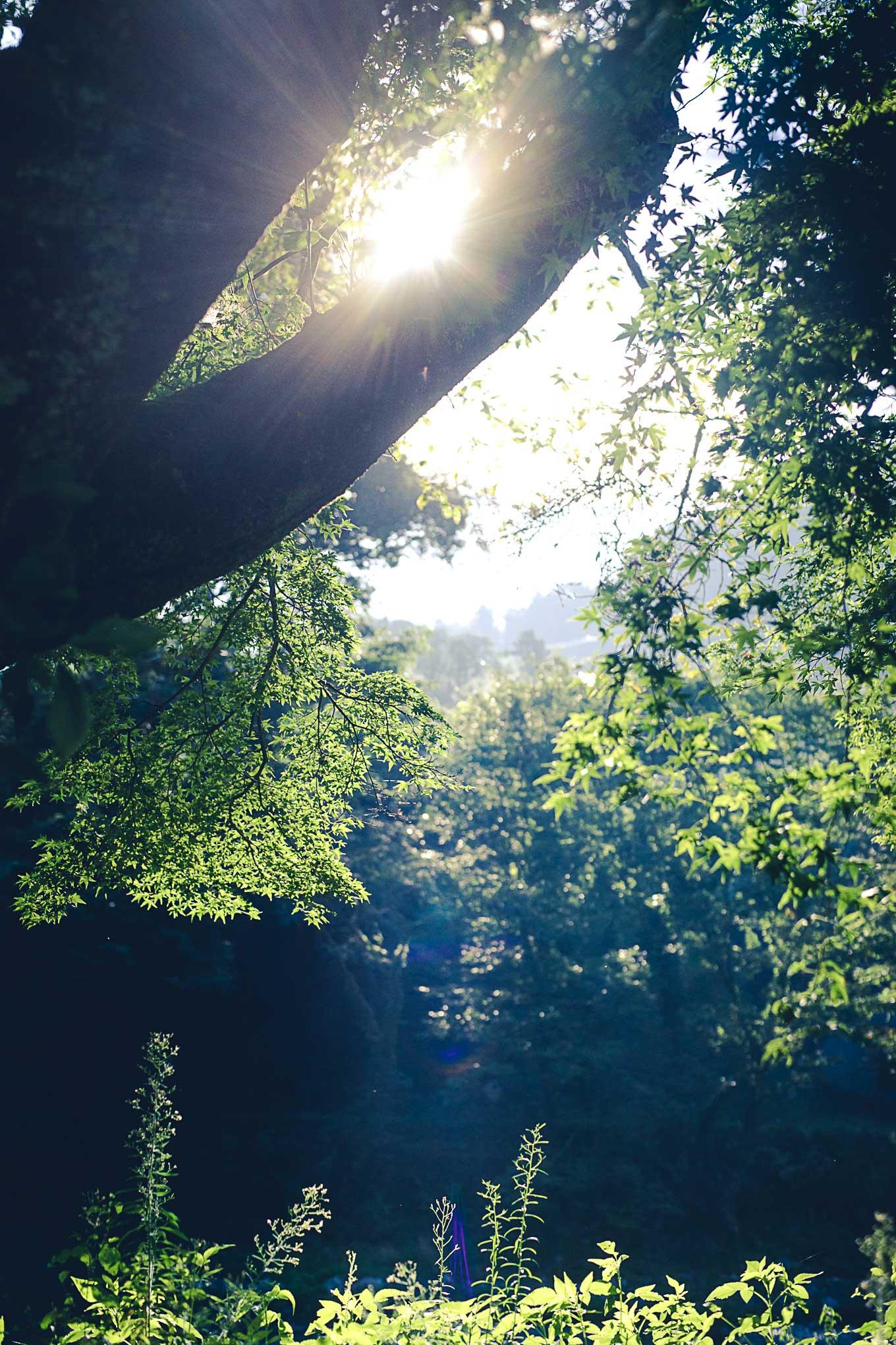 morning-picnic-3