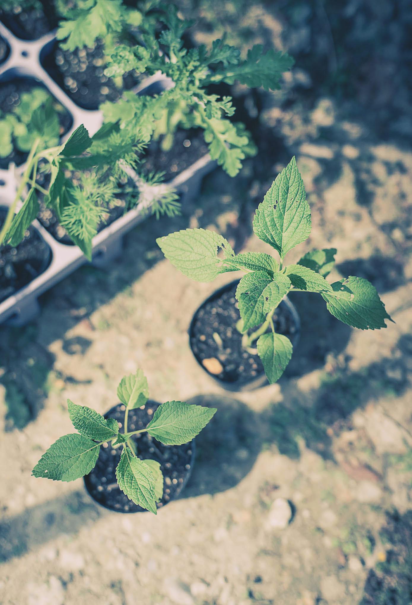 organic-market-20151004-2