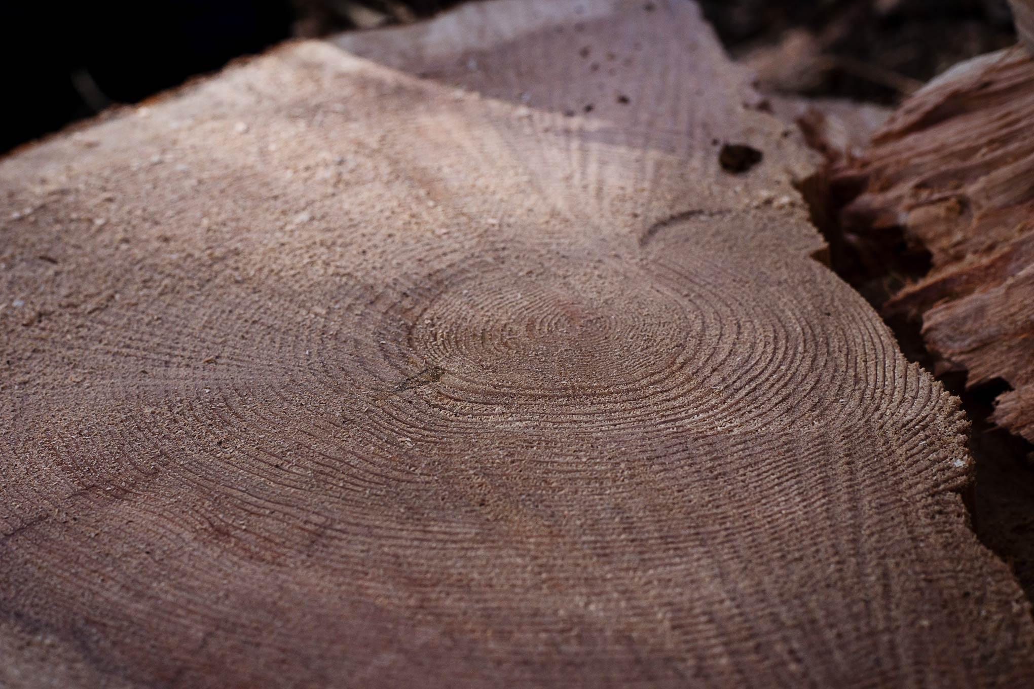 cedar-logging-201512-10