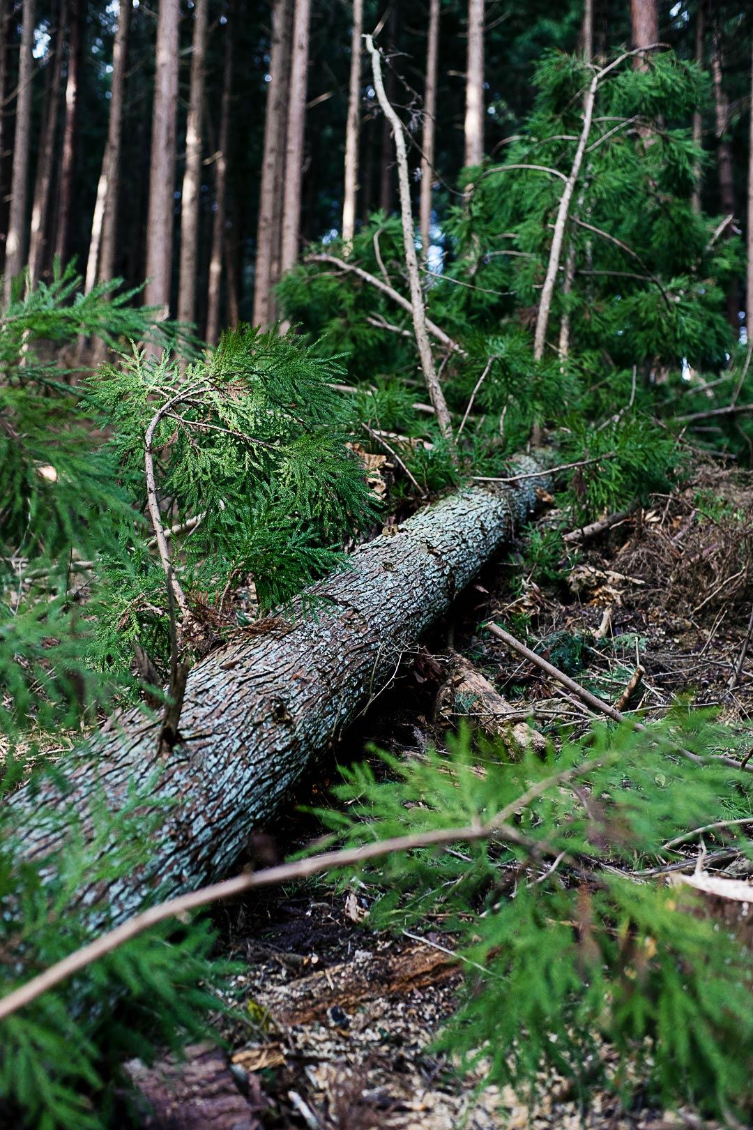 cedar-logging-201512-4
