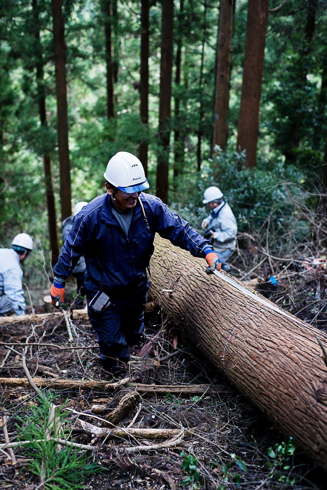 cedar-logging-201512-5