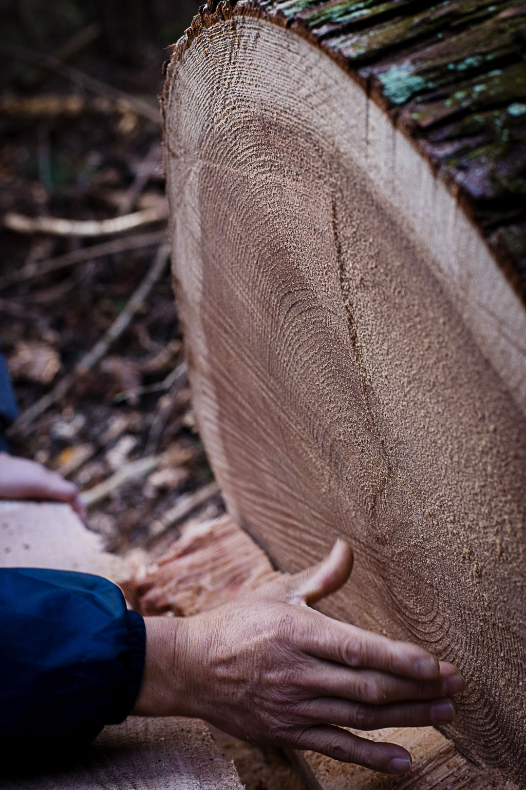 cedar-logging-201512-6