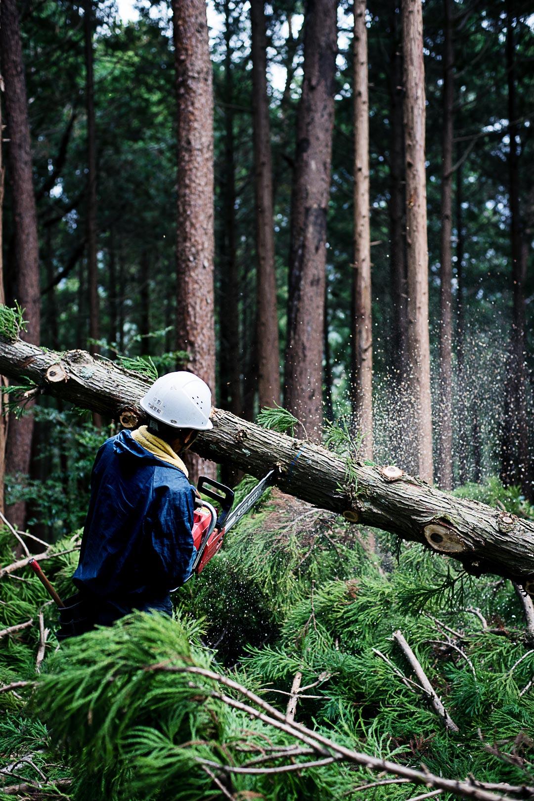cedar-logging-201512-8