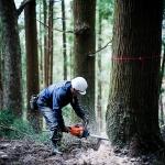 【曲げわっぱプロジェクト】杉の伐採はこんなにカッコよかった
