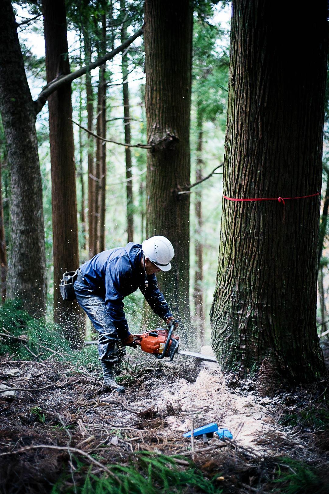cedar-logging-201512-9