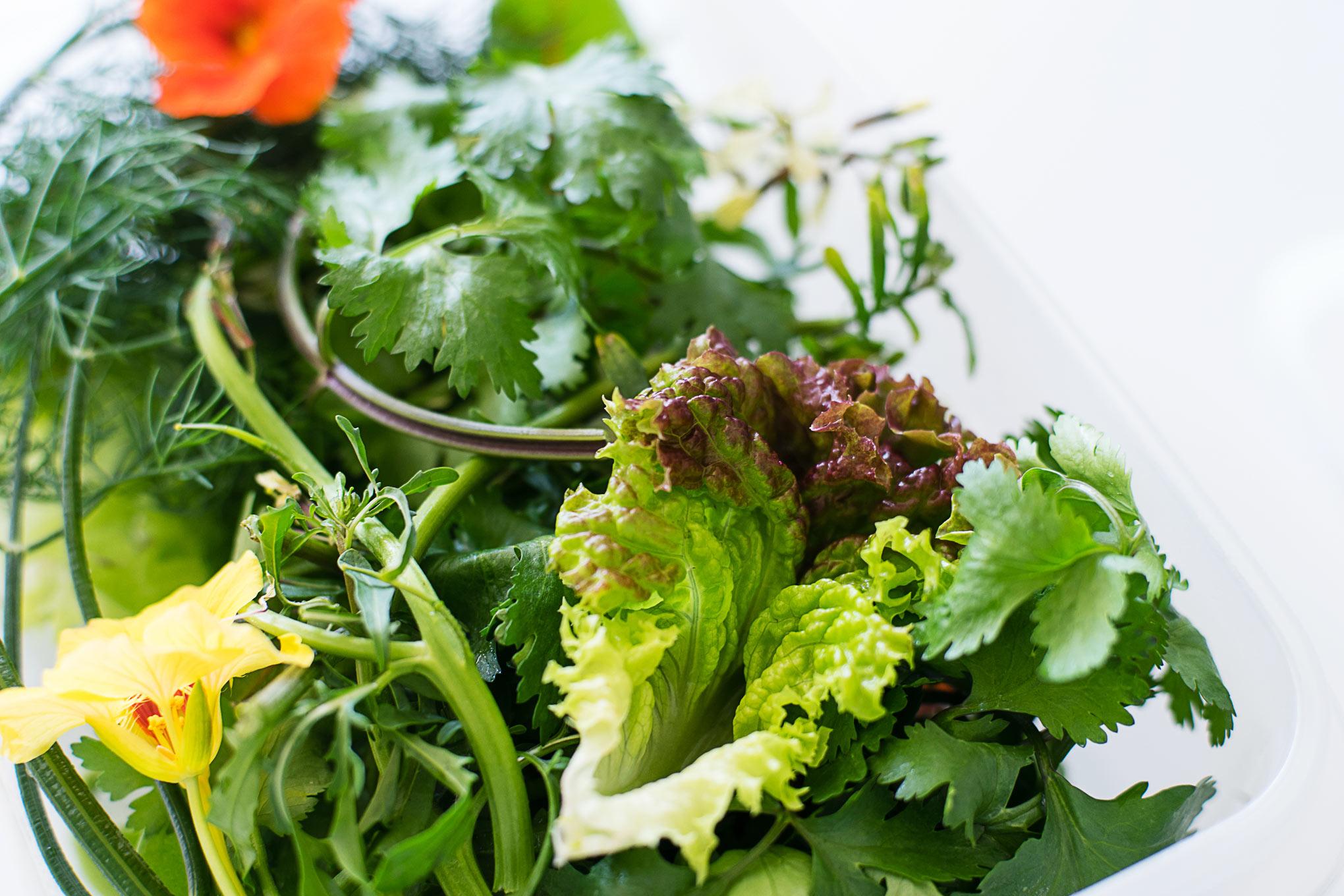 時間が経ってもパリッ!葉野菜を驚くほど長持ちさせる方法。