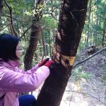【神山曲げわっぱプロジェクトその18】山桜の皮を採りに行ってきました