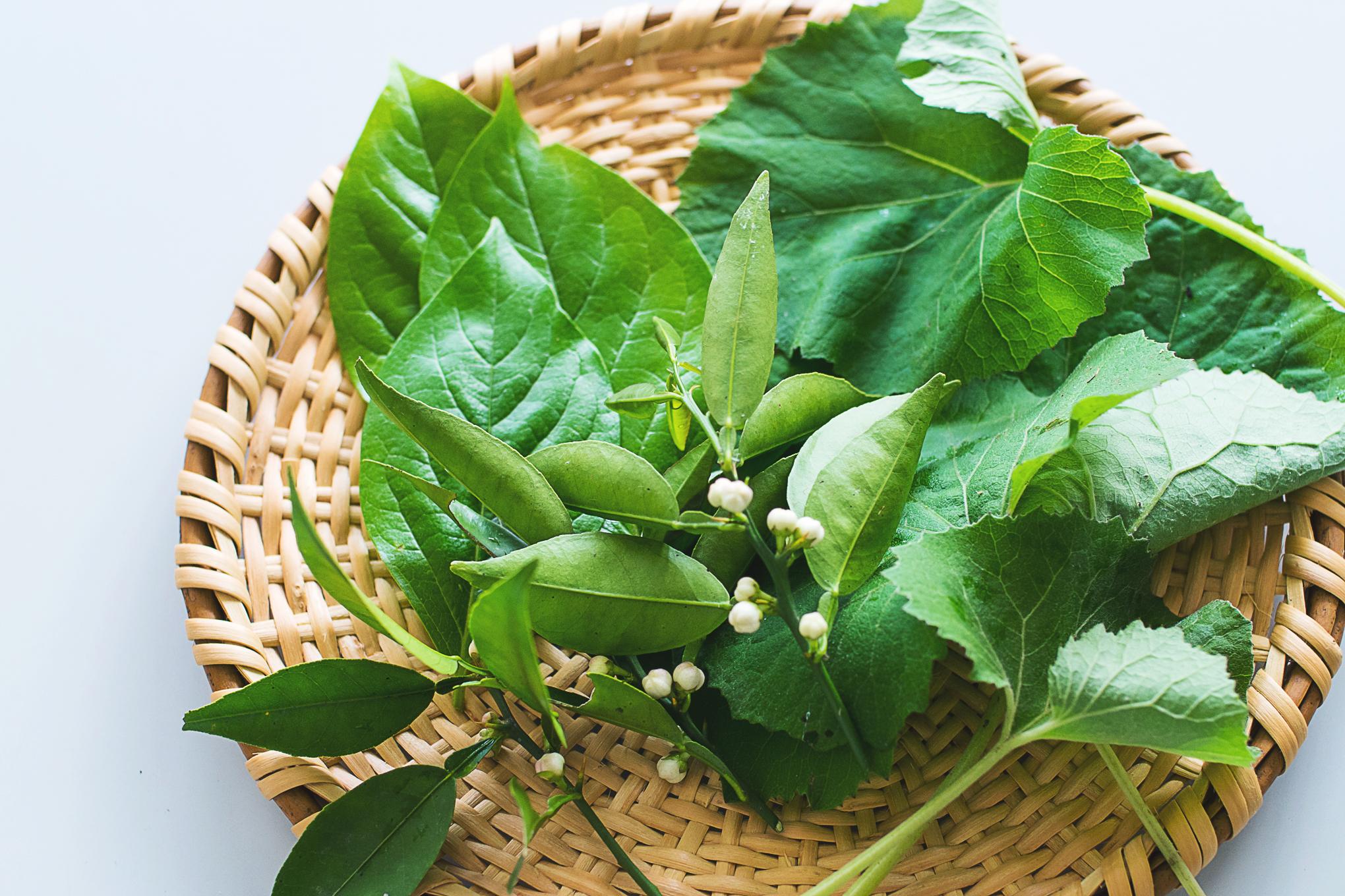 ハラン、柿の葉、すだちのつぼみ。お料理に添える葉っぱを庭で摘む。