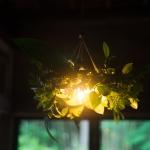 曲げ輪と庭の植物で、フライングリース。